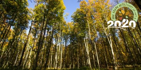 Titokzatos erdő: a klímamentő
