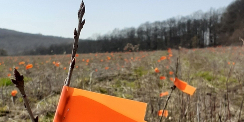 Folytatódnak az erdőtelepítések