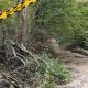 Időszakos erdőlátogatási korlátozás a Cuhában