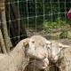 Május 15.-én megnyitotta kapuit az állatpark