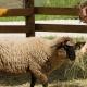 Állatparkunk megnyitja kapuit