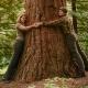 Minden elsős hallgatója után fát ültet a Soproni Egyetem