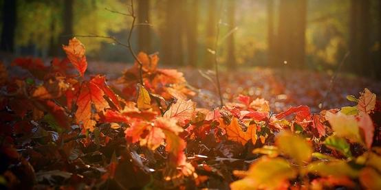 Magyarország ősszel is vár