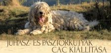 CAC Kutyakiállítás Sárosfőn