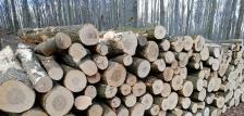Szociális tűzifa Bakonyi erdőkből