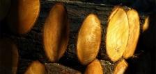 Nyári tűzifa áreső a Bakonyerdőnél